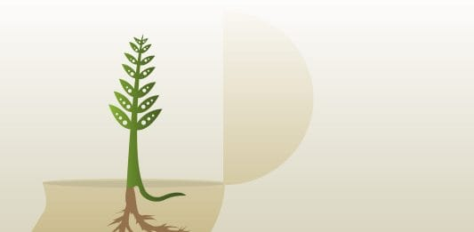 Illustration of a tree growing in a human mind. Credit: Kimberly Vohsen/freeimages.com