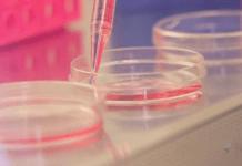 Photo: Lab experiment, pink liquid, dishes, dropper
